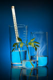 Chemistry and life Royalty Free Stock Images