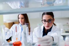 Young female researchers conducting laboratory test. Chemistry and medicine students working in a laboratory. Young female researchers doing lab tests royalty free stock photos