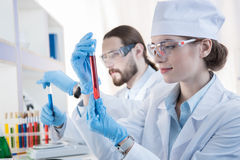 Chemists making experiment. Professional chemists making experiment with reagents in test tubes royalty free stock photography