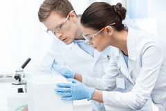 Chemists in protective glasses and gloves making experiment in lab Royalty Free Stock Photos