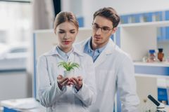 Chemists with fern plant Royalty Free Stock Images