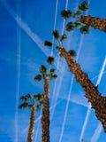 Chemtrails del aeroplano sobre las palmeras imagen de archivo