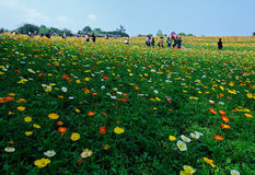 Chengdu China-An ocean of flowers. Royalty Free Stock Image