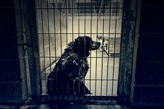 Chenil de chien tranquille image libre de droits
