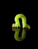 Chenille verte d'isolement sur le noir photographie stock