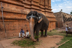 CHENNAI, INDIA-FEBRUARY 13: Blessing from elephant of India on F Stock Photography
