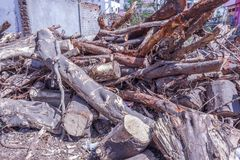 Fallen tree branch been cut down into pieces royalty free stock images