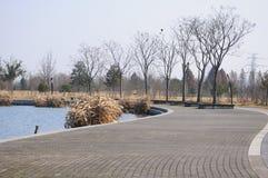 Chenshan Botanical Garden Walkway Royalty Free Stock Image