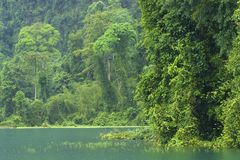 Cheo Lan lake in Khao Sok National park, Thailand Stock Images