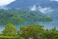 Cheo Lan lake in Khao Sok National park, Thailand. Landscape of a rainforest in Khao Sok National park. Thailand Stock Photography
