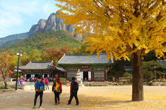 Temple and Ginkgo Autumn scenery Royalty Free Stock Images