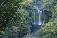Cheonjeyeon vattenfall Arkivbild