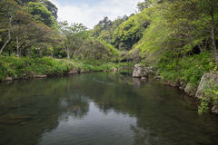 Cheonjiyeon River and lush trees Royalty Free Stock Photos
