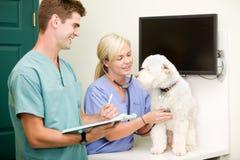 Chequeo del veterinario del perro imagen de archivo libre de regalías
