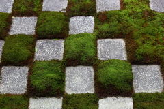 Chequered moss pattern Stock Image