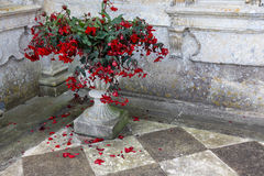 Chequered paving slabs and plant pot Royalty Free Stock Photo