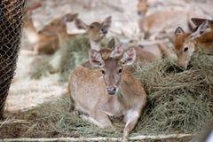 Cher dans le safari de nuit de Chiangmai image libre de droits