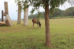 Cher mangez dans la forêt apprécient avec la nature Image libre de droits
