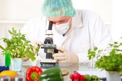 Chercheur avec le microscope avec des légumes d'un OGM Photographie stock libre de droits