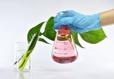 Chercheur mélangeant l'extraction naturelle organique, cosmétiques de formulation de soins de la peau de pharmacien d'essence d'u photos libres de droits