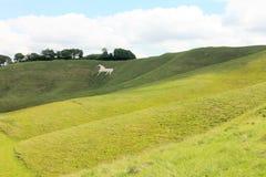 Cherhill biały koń, Wiltshire Anglia zdjęcie royalty free