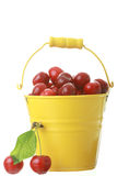 Cheries in colorful yellow metal bucket Royalty Free Stock Photos