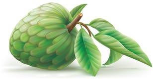 Cherimoya Annona φρούτα με τα leafes Απεικόνιση αποθεμάτων