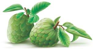 Cherimoya Annona φρούτα με τα leafes Διανυσματική απεικόνιση