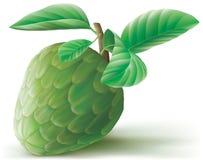 Cherimoya Annona φρούτα Ελεύθερη απεικόνιση δικαιώματος