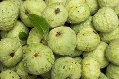 Cherimoya fruit Annona cherimola Stock Photography