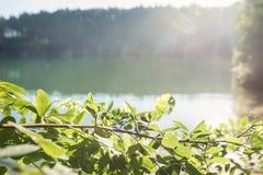 Chernigov蓝色湖,乌克兰 免版税库存照片