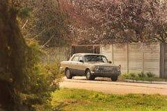 Chernihiv Ukraina, Kwiecie?, - 10, 2019: Stary samochodowy Volga w wio?nie przeciw t?u kwiatono?ni drzewa fotografia royalty free