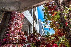 Chernobyl exclusion area Royalty Free Stock Photos