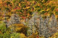 Cherohala Skyway в пиковых цветах осени Стоковое Фото