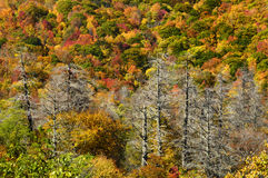 Cherohala Skyway i maximala Autumn Colors Arkivfoto