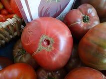 Cherokee purpurrote Tomate Stockbilder