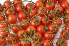 Cherri-Tomaten Lizenzfreie Stockbilder