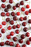 Cherri tree Royalty Free Stock Photos