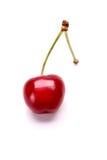 Cherrie dulce Imagen de archivo libre de regalías