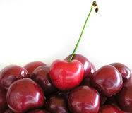 Cherries. Red cherries Stock Photography