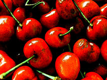 Cherries. Macro of cherries Stock Images