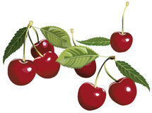 Cherries. Illustration of artistic cherries with leaves Stock Images