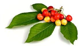Free Cherries Stock Images - 14722134