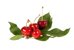 Cherries. Isolated on white background stock photography