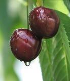 Cherries 2 Stock Photo