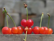 The cherries Royalty Free Stock Image