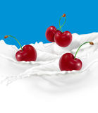 Cherries. Illustrated cherries with milk splash Royalty Free Stock Photo