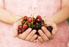 Cherries. Hands holding a bunch of  fresh cherries Stock Photography