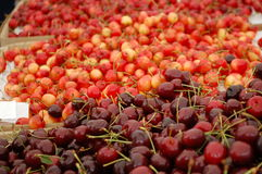 Cherries. Dark red bing cherries, and yellow-red Rainier cherries for sale in the outdoor market Stock Images