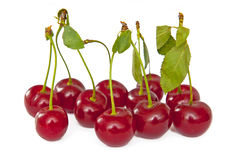 Cherries. Isolated on the white background Stock Photos